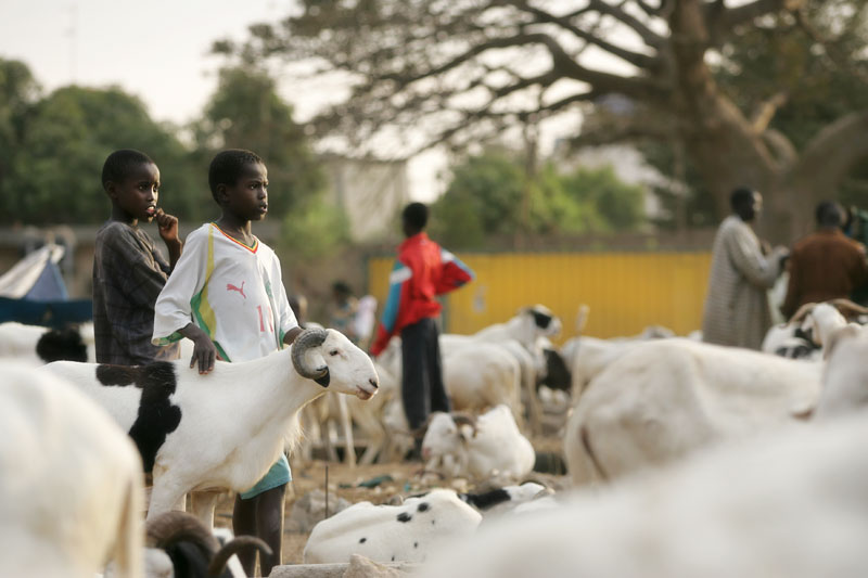 Sébastien Larose photographe au Senegal