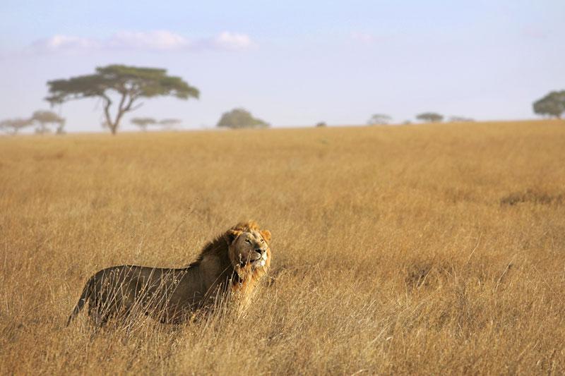 Sébastien Larose photographe en Tanzanie